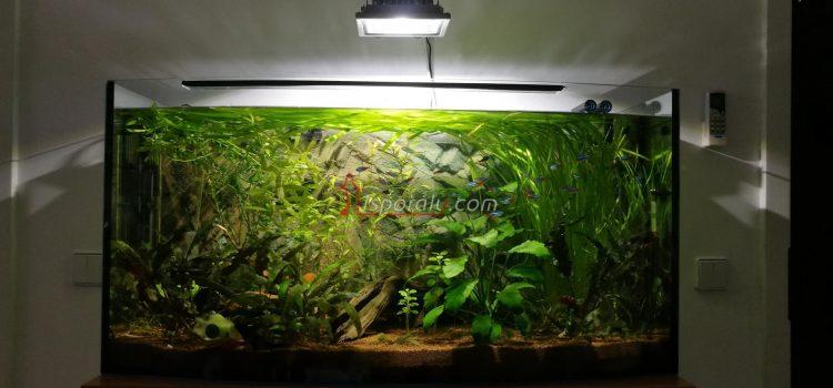 Akvárium 2017